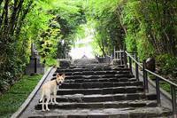 紫陽花寺 - 愛犬タクと中年オヤジの気ままな日記