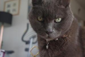 ぷぅたんのお爪の三日月アタックで目覚めた今日 - 『ココんちの (3+1)+(1+1+1) 猫と一犬のたわごと』 6 Pitchouns et 2 Pitchounettes