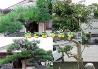 ☆庭木の手入れ - ニットルームpiko
