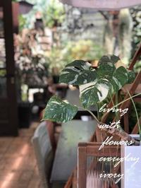取材 -  Flower and cafe 花空間 ivory (アイボリー)