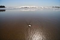 イタンキ浜の散歩....3 - slow life-annex
