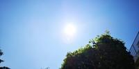 蒸しケーキin長命草 - ライフ薬局(茨城県神栖市)ウェブログ