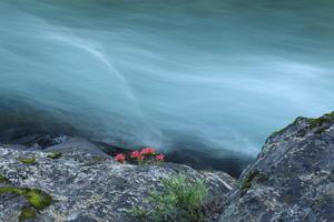 ツツジ咲く川 -