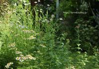 ハーブの季節へ~* - miyorinの秘密のお庭