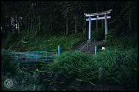 蛍神社(大垣市) - びっと飴
