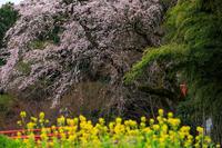 桜咲く京都2019正法寺の桜たち - 花景色-K.W.C. PhotoBlog