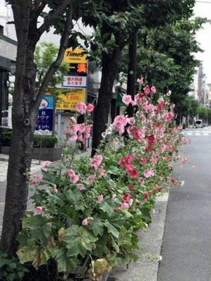 6月に咲く花 - 「美味しい!」が好き