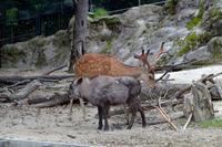 北海道と四国の出会い - 動物園へ行こう