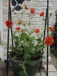 6月の庭 - グリママの花日記