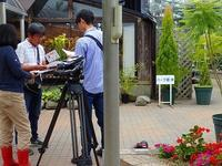 ユッカ、新聞取材&テレビ収録 - 手柄山温室植物園ブログ 『山の上から花だより』