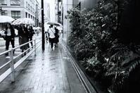 今日も雨だった - summicron