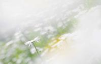 今日のふわラー #417 - ainosatoブログ02