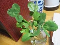 五つ葉のクローバー! - 北海道・池田町のワインの国からお知らせです
