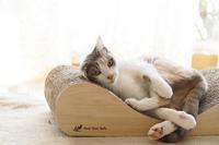 体にフィットする爪とぎ - きょうだい猫と仲良し暮らし