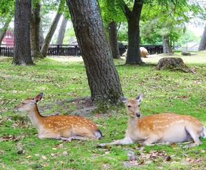 奈良は興福寺へ - 軽井沢プリフラdiary