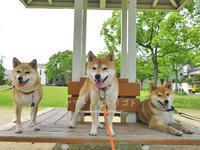 三犬三様 - yamatoのひとりごと