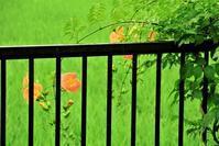 印象に残る緑とオレンジのコントラスト - 気楽おっさんの蓼科偶感