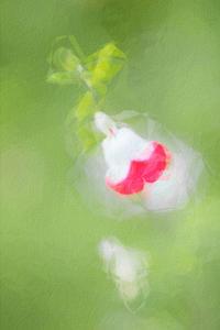 チェリーセージ - 光 塗人 の デジタル フォト グラフィック アート (DIGITAL PHOTOGRAPHIC ARTWORKS)