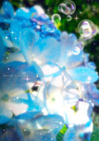 紫陽花の裏から - colorful❁⃘*.゚