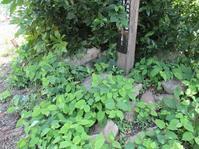 散策を楽しむための鳥谷野の古墳情報⑧ - 風の人:シンの独り言(大人の総合学習的な生活の試み)