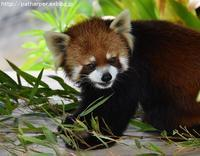 2019年6月王子動物園ロバの日イベント - ハープの徒然草