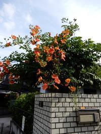 <凌霄花> - 庭を眺めて…コーヒータイム