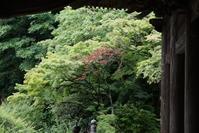 6.22 妙本寺 - 週末はソニーα6500でぶらり鎌倉・湘南散歩!