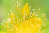ビョウヤナギ - 光 塗人 の デジタル フォト グラフィック アート (DIGITAL PHOTOGRAPHIC ARTWORKS)