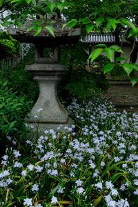 新緑と射干(真如堂) - 花景色-K.W.C. PhotoBlog