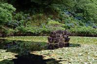 みのかも健康の森の紫陽花 - 尾張名所図会を巡る