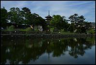 奈良観光-20 - Camellia-shige Gallery 2
