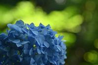 五島美術館の森のあじさい - kenのデジカメライフ