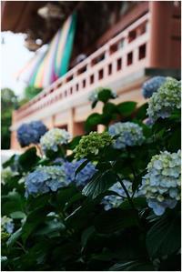 智積院の紫陽花 - HIGEMASA's Moody Photo