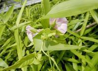 茂みの中で咲く2花 - 【出逢いの花々】