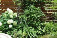 涼を呼ぶ蔓植物ヤマホロシ&風船カズラ - miyorinの秘密のお庭