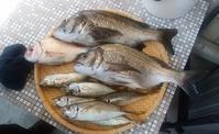 釣り人の食卓・・・小魚 - 波止釣り放浪記 part3