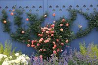 バラ咲き誇る中之条ガーデンズ⑦ビビットカラーのガーデン#1 - 風の彩り-2