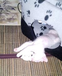 寝るねるネルラ - 目から鱗ンタクトレンズ