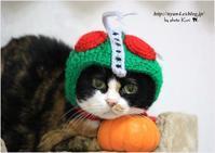 仮面ライダー猫 - 4にゃん日記+