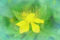 ビョウヤナギ 2 - 光 塗人 の デジタル フォト グラフィック アート (DIGITAL PHOTOGRAPHIC ARTWORKS)
