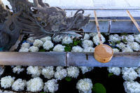 春の彩り(柳谷観音) - 花景色-K.W.C. PhotoBlog