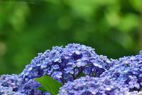 紫陽花の場所 #2 - T O K I B A K O