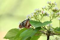 山や川でであったと鳥さんと昆虫たち♪ - happy-cafe*vol.2