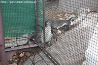 2019年6月天王寺動物園その2フンボ雛体重測定 - ハープの徒然草
