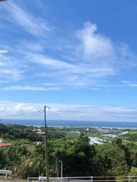 """梅雨明けマンゴー。 - トキシンのイラストレーター的""""沖縄""""生活"""