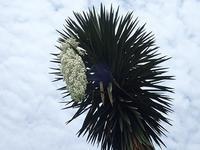 「ベゴニア展」&今日のユッカ、そしてカワイイ珍客♪ - 手柄山温室植物園ブログ 『山の上から花だより』