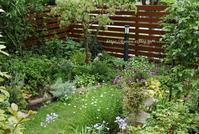 夢は広がる北側カーポート夏に強いペチュニア - miyorinの秘密のお庭