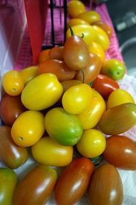 雨にも負けず、トマトは育つ! - デジカメ一眼レフ開眼への道
