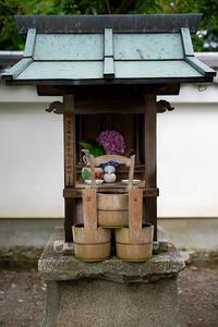 桔梗@盧山寺 - デジタルな鍛冶屋の写真歩記