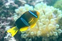 葛西臨海水族園:「伊豆七島の海3」①~卵を守るクマノミ - 続々・動物園ありマス。